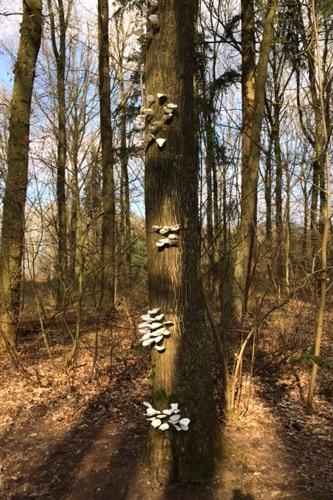 boompaddestoelen